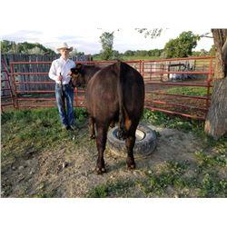 Gavin Slade - Beef - Weight: 1355