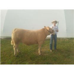 Darden Anderson - Beef - Weight: 1545