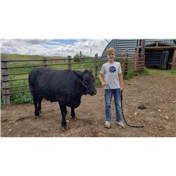 Stockton Oxarart - Beef - Weight: 1405