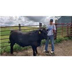 Kooper Oxarart - Beef - Weight: 1520