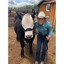 Jaycee Erickson - Beef - Weight: 1430
