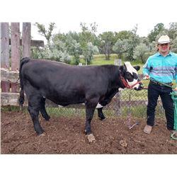 Dre Oshio - Beef - Weight: 1255