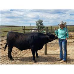 Arena Niebur - Beef - Weight: 1425