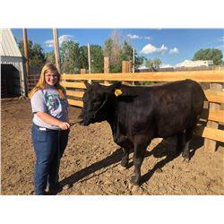 Samme Gibbs - Beef - Weight: 1480