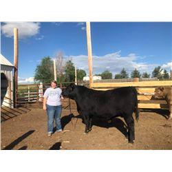 Sydney Gibbs - Beef - Weight: 1410