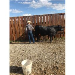 Sonny Gray - Beef - Weight: 1265