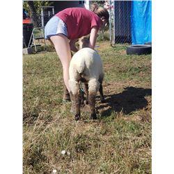 Madyson Warburton - Sheep - Weight: 97
