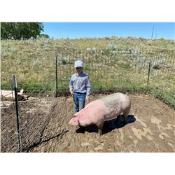 Tant Anderson - Swine - Weight: 282