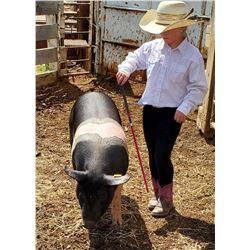 Addison Benson - Swine - Weight: 277