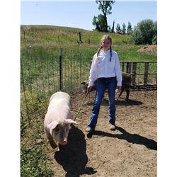 Kylie Bishop - Swine - Weight: 253