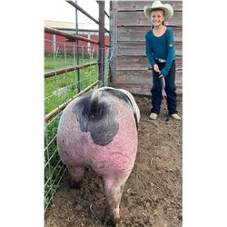 Hadley Hammond - Swine - Weight: 252