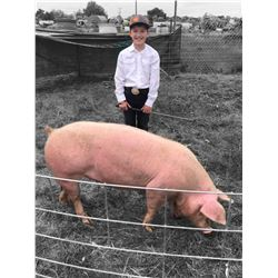 Daxton Math - Swine - Weight: 295