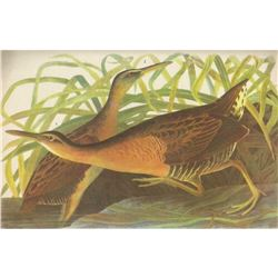 c1946 Audubon Print, #203 King Rail