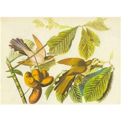 c1946 Audubon Print, #2 Yellow-Billed Cuckoo