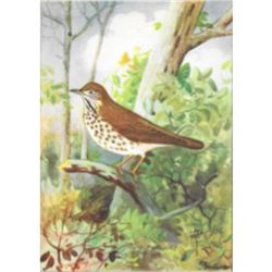 1920's Thrush Color Lithograph Print