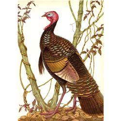 1950 Menaboni Print, Eastern Wild Turkey