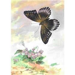 1920's Red-Spotted Purple Butterfly Color Lithograph Print