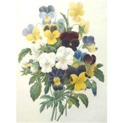 After Pierre-Jospeh Redoute, Floral Print, #97 Bouquet de Pansees ( Pansies )