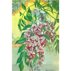Wisteria, 1926 The Nature Library Color Illustration, Lithograph Print
