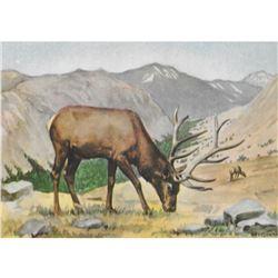 1920's Elk Color Lithograph Print
