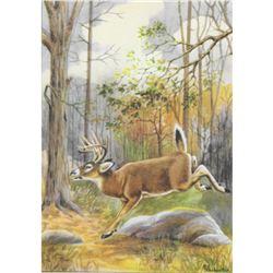 1920's Virginia Deer Color Lithograph Print