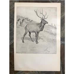 Early 1900's Half-tone Hunting Lodge Print, The Monarch, A. B. Frost, Elk