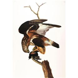c1946 Audubon Print, #166 Rough-Legged Hawk
