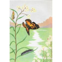 1920's Painted Beauty Butterfly Color Lithograph Print