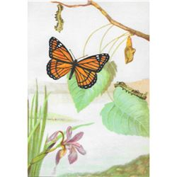 1920's Viceroy Butterfly Color Lithograph Print