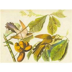 c1946 Audubon Print, Yellow-Billed Cuckoo