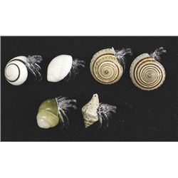 Natural Seashells with Hand Blown Glass Hermit Crabs