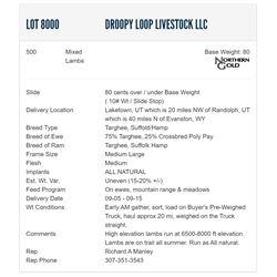 Droopy Loop Livestock LLC - 500 Mixeds Lambs