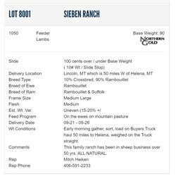 Sieben Ranch - 1050 Feeders Lambs
