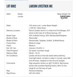 Larson Livestock Inc - 2600 Mixeds Lambs