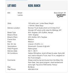 Kiehl Ranch - 600 Mixeds Lambs