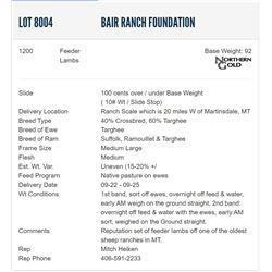 Bair Ranch Foundation - 1200 Feeders Lambs