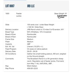 JRB LLC - 1800 Feeders Lambs