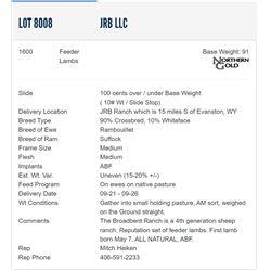 JRB LLC - 1600 Feeders Lambs