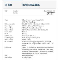 Travis Kruckenberg - 850 Feeders Lambs