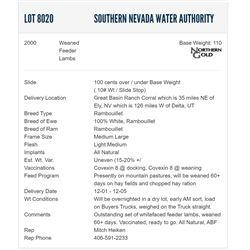 Southern Nevada Water Authority - 2000 Weaned Feeders Lambs