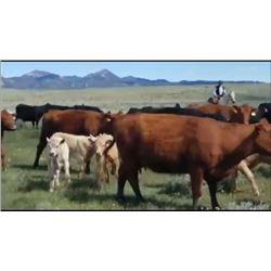 Jeff Warneke - 100 Steers