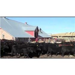 John McCafferty - 278 Steers
