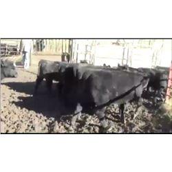 John McCafferty - 180 Heifers