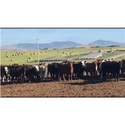 Quarter Circle Cattle Co - 64 Weaned Steers
