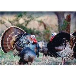 2 Person/2 day South Texas Turkey Hunt Trip