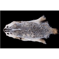 Montana Taxidermy American Badger Hide