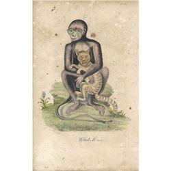 18thc Hand-colored George Edwards Engraving, Black Monkey No. 9