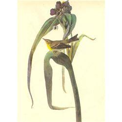 c1946 Audubon Print, #30 Pine Warbler