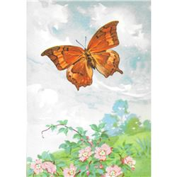 1920's Goatweed Emperor Butterfly Color Lithograph Print