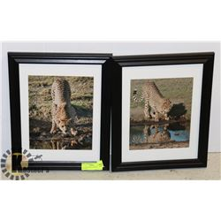 LOT OF 2 FRAMED  CHEETAH PICTURES
